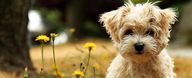 怎麼給狗狗洗臉 都需要注意那些 - 每日頭條