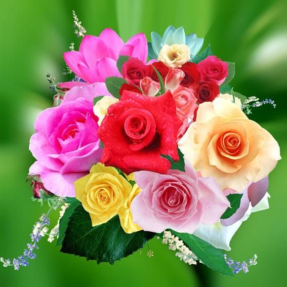 各種花的表達法及物語諺語大全(中英文對照) - 每日頭條