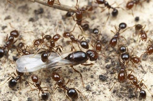 從螞蟻帝國來看什麼叫社會行為 - 每日頭條