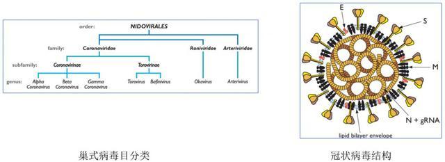 新型冠狀病毒肺炎來襲。如何快速區分普通感冒。流感和病毒性肺炎? - 每日頭條