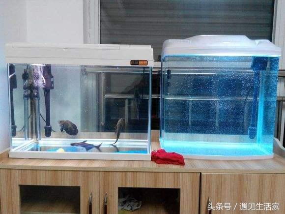 新手養魚五步曲之第二步,養水,新水怎樣養成老水? - 每日頭條