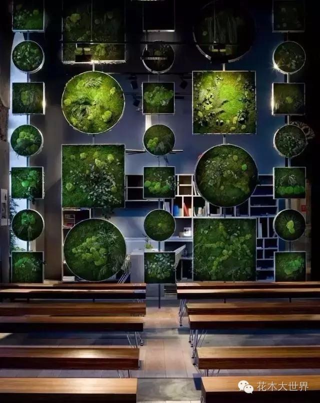 植物應用--植物屏風 - 每日頭條