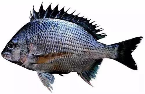 美味與深海共存——帶您領略各式深海魚類 - 每日頭條