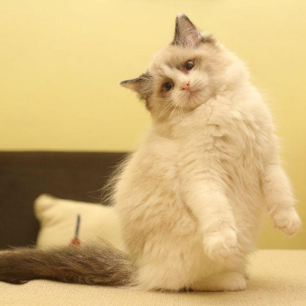 貓奴福利!武漢貓主題餐廳推薦 - 每日頭條