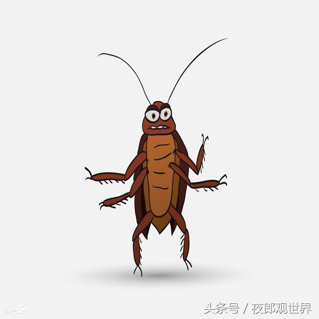 家裡蟑螂來一個死一個!阿婆獨門秘方滅蟑螂,放家裡一隻接著一隻消滅超神奇!