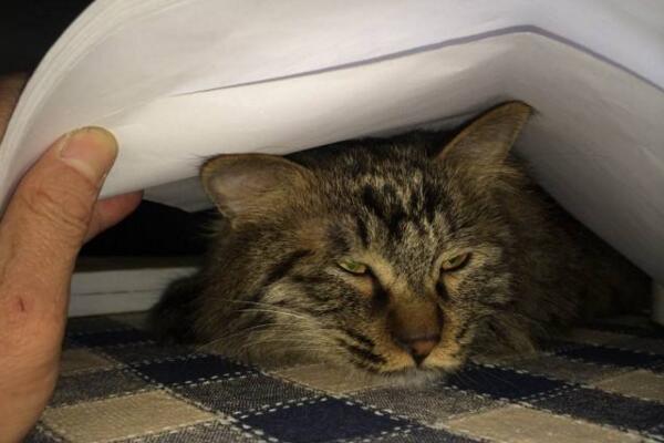 貓咪的睡姿居然有這麼多的學問,你都懂它們的意思嗎 - 每日頭條