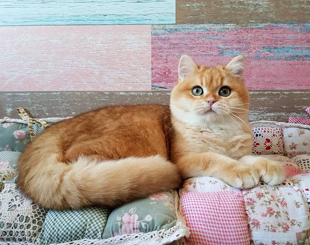 貓咪看起來很健康,但短時間內身體某一區域禿毛是怎麼回事? - 每日頭條