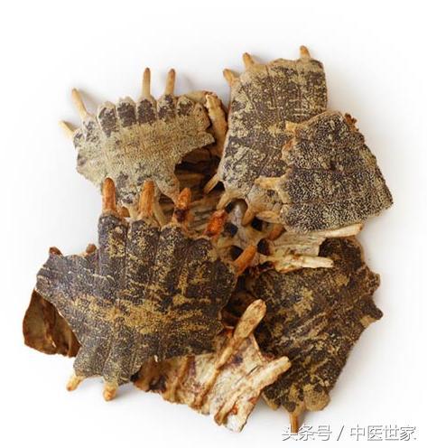 鱉甲具有滋養肝陰,散消痞,強筋健骨的功效。 - 每日頭條