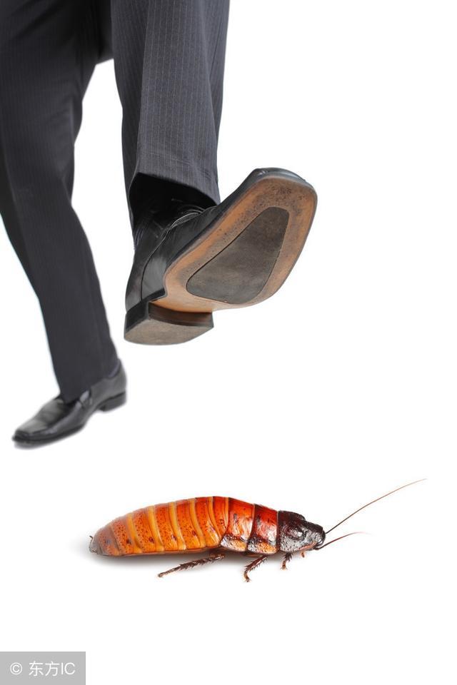 家裡蟑螂太猖狂。生物學教授教你一招。蟑螂全部滅光一隻也沒有 - 每日頭條