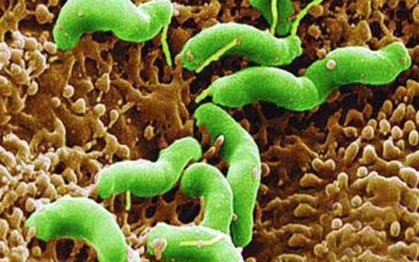 醫生有話說,如何根治幽門螺旋菌 - 每日頭條