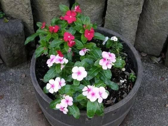 10種一年四季開花的植物,北方的朋友只能看著羨慕 - 每日頭條