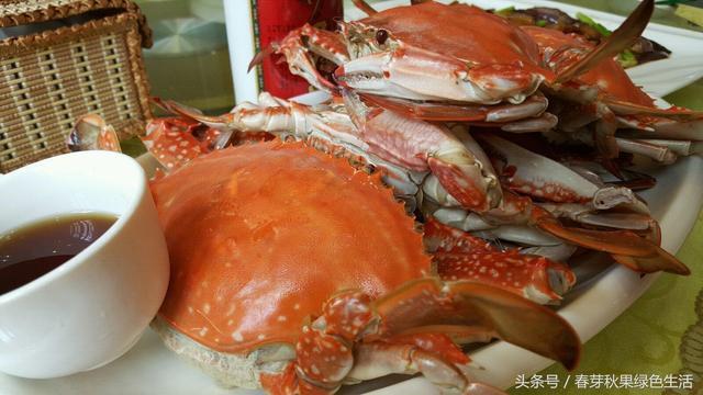秋天來了哪種螃蟹最好吃?梭子蟹青蟹還是大閘蟹? - 每日頭條
