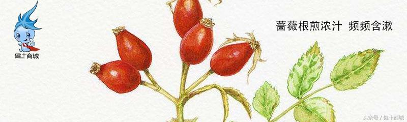 薔薇果的藥用價值 - 每日頭條