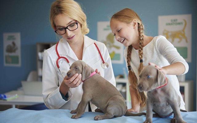 怕狗咬當什麼寵物醫生? - 每日頭條