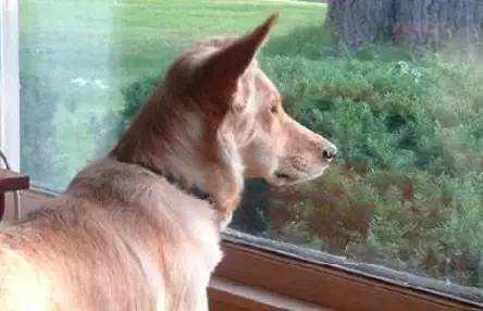 家有老犬,很珍貴![心]老齡狗狗家長你應該知道的 - 每日頭條