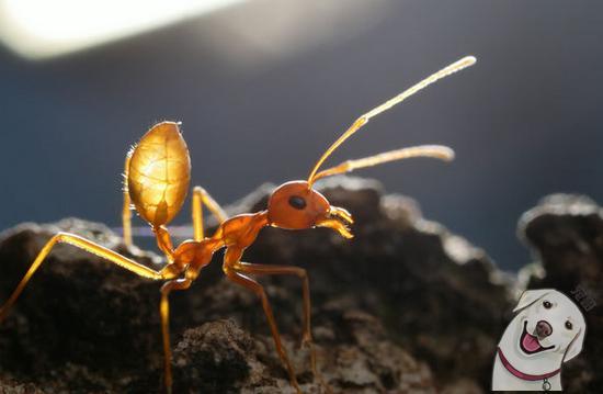 00後女孩竟在家中養百隻有毒螞蟻做寵物。親手做蟻巢 - 每日頭條