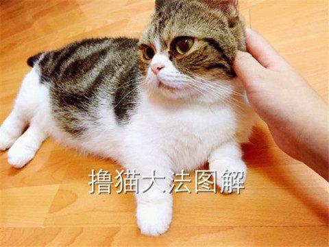 最靠譜的擼貓大法。走過路過就是不能錯過! - 每日頭條