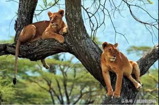一生一定要看一次的動物大遷徙 - 每日頭條