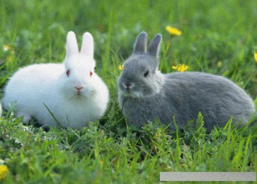 兔子軟萌又可愛。但是養起來真費勁。教你如何養一隻可愛的小白兔 - 每日頭條