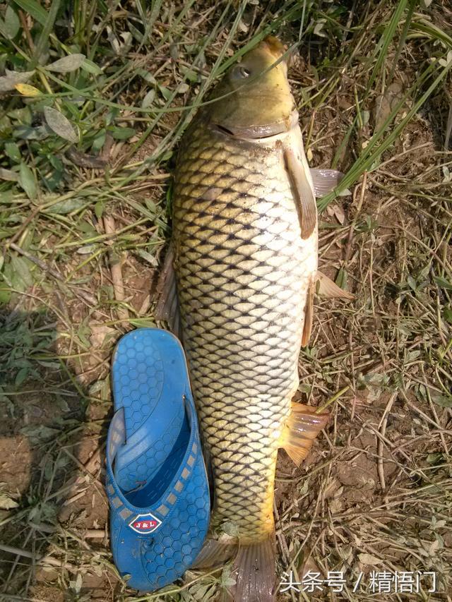 鄉下池塘釣魚。滿滿的收穫 - 每日頭條