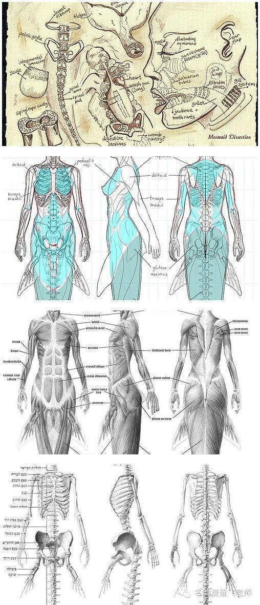 繪畫素材 人體動態及結構參考圖 - 每日頭條