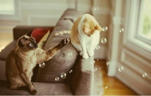 貓咪太粘人了怎麼辦? - 每日頭條