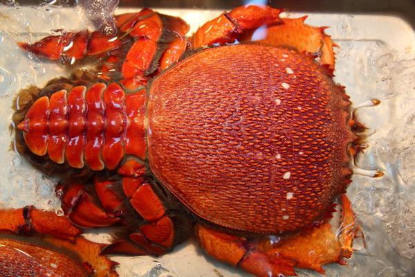 螃蟹經常吃,你知道怎麼區分大閘蟹,毛蟹,青蟹,梭子蟹,河蟹,帝王蟹,松葉蟹等等螃蟹嗎? - 每日頭條