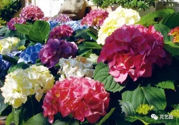 庭院景觀設計四大風格──英式風格花園 - 每日頭條