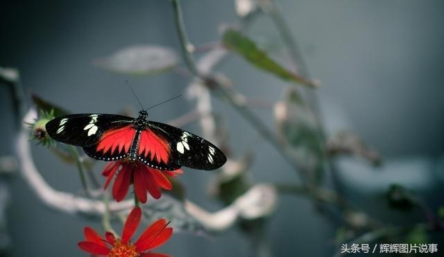 蝴蝶的品種簡介 - 每日頭條