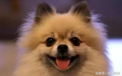 狗年話狗——哪些品種的狗狗來自德國? - 每日頭條