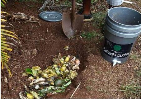 有了這幾種廢料 用來買養花專業肥的幾千塊錢都被省下了 - 每日頭條