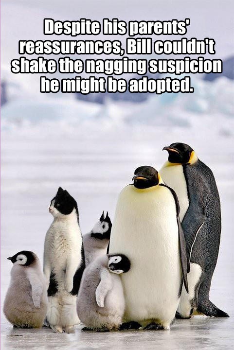 Image result for image cat amongst penguins