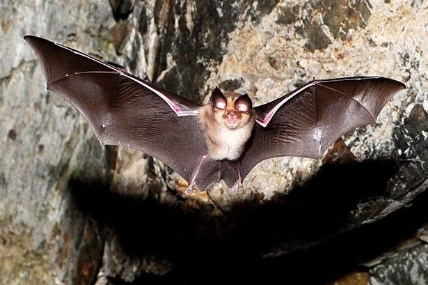 Bats fly in a cave
