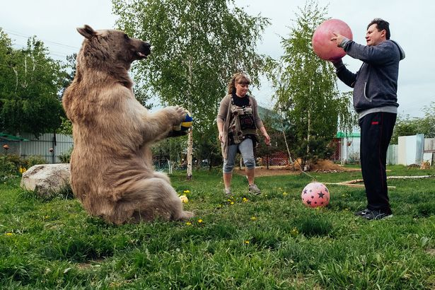 Stepan the bear with Svetlana and Yuriy Panteleenko playing catch