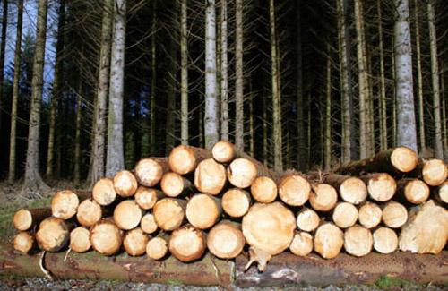 Картинки по запросу деревина
