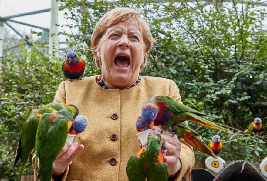 merkel_parrots