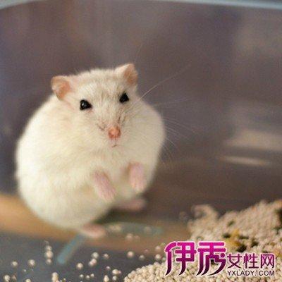 介紹倉鼠的生活習性 教你幾個挑選倉鼠的好方法 - 壹讀