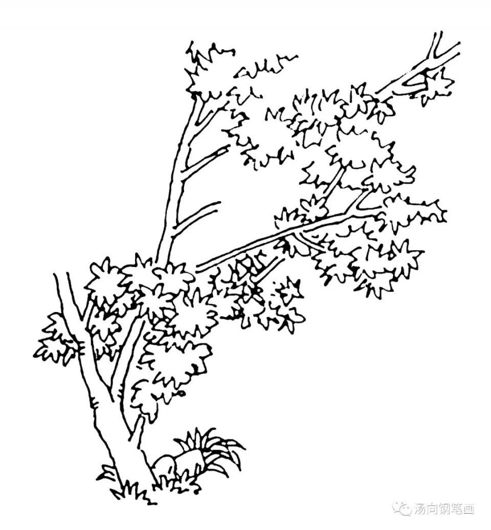 學鋼筆畫202夏日楓樹……看看畫得如何? - 壹讀