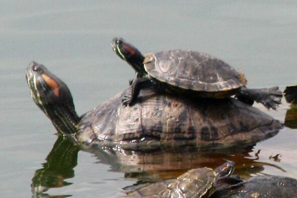 烏龜的種類及價格 烏龜皮膚病怎麼治 - 壹讀