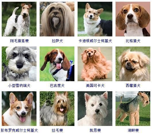 178種狗狗品種大全。原來按體型、智商都是這麼分 - 壹讀