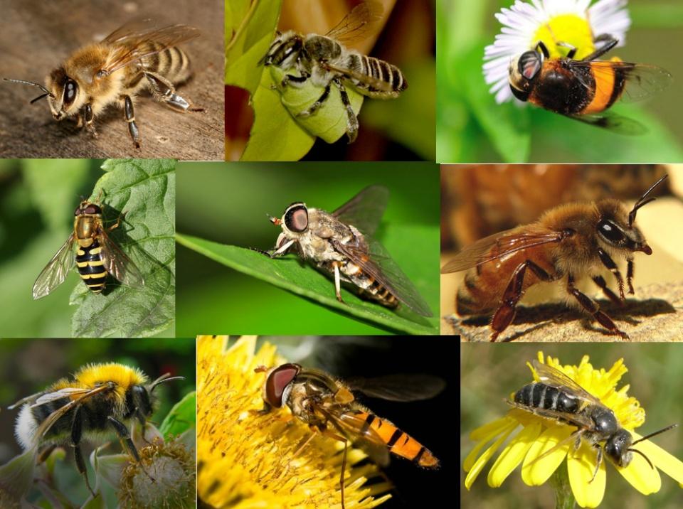 如何區分黃蜂、蜜蜂、馬蜂、胡蜂……各種蜂? - 壹讀