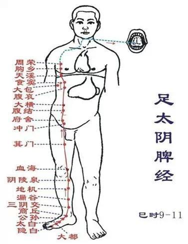 中醫入門-12經絡動態循行圖及記憶歌訣 - 壹讀