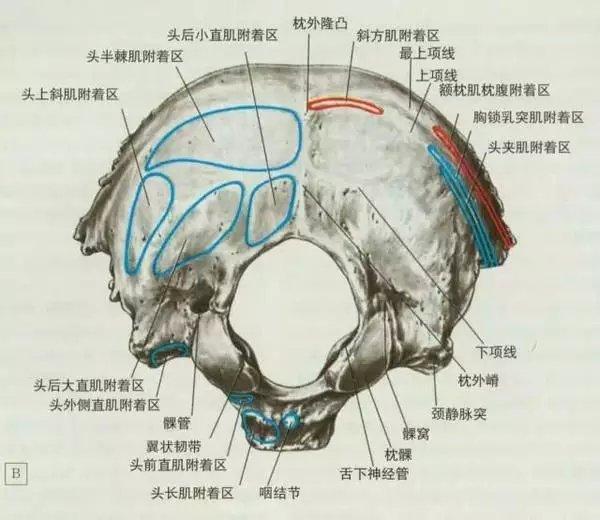 「聲東擊西」的頸源性頭痛。頭痛為啥與頸部有關係? - 壹讀
