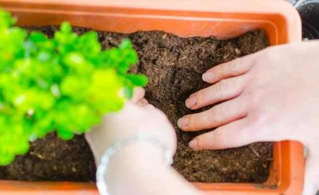 這小東西可別扔。放盆里養花蹭蹭長。老花農都當寶貝搶著要! - 壹讀