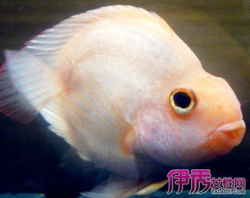紅鸚鵡魚變白了怎麼辦? 五大措施教你輕鬆應對 - 壹讀