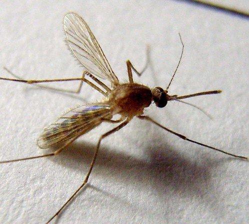 蚊子的壽命 不拍死蚊子它能活多久? - 壹讀