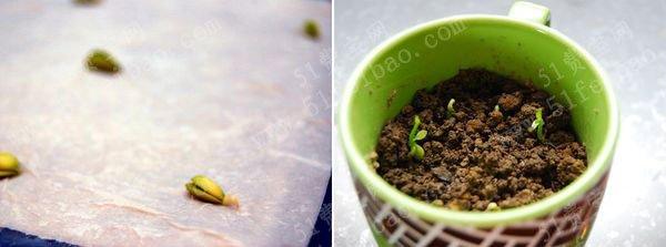 檸檬種子怎麼種出檸檬樹|diy檸檬樹盆景|怎麼種植髮芽檸檬 - 壹讀