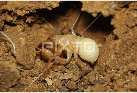 怎樣找未出土的蟬幼蟲:蟬的幼蟲在地下多少年 - 壹讀