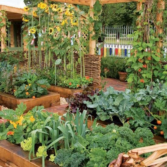 DIY菜園子。種菜不僅使庭院美觀。還能有純天然綠色食品吃! - 壹讀