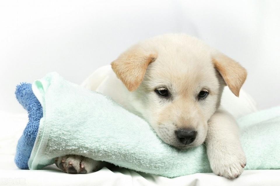 狗狗經常喘氣。像呼吸不過來是什麼回事?該怎麼應對? - 壹讀